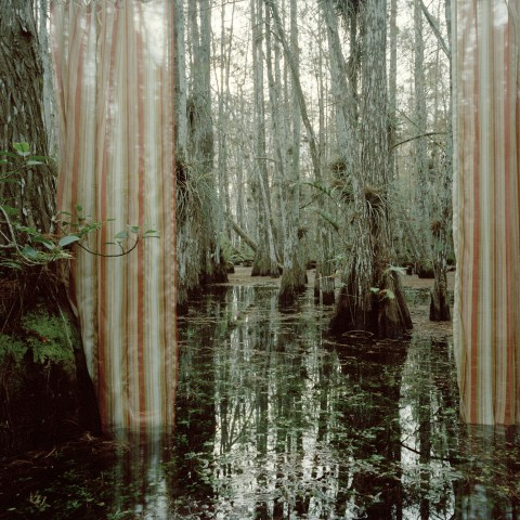 Rebecca Reeve | artsy forager #art #photography #nature