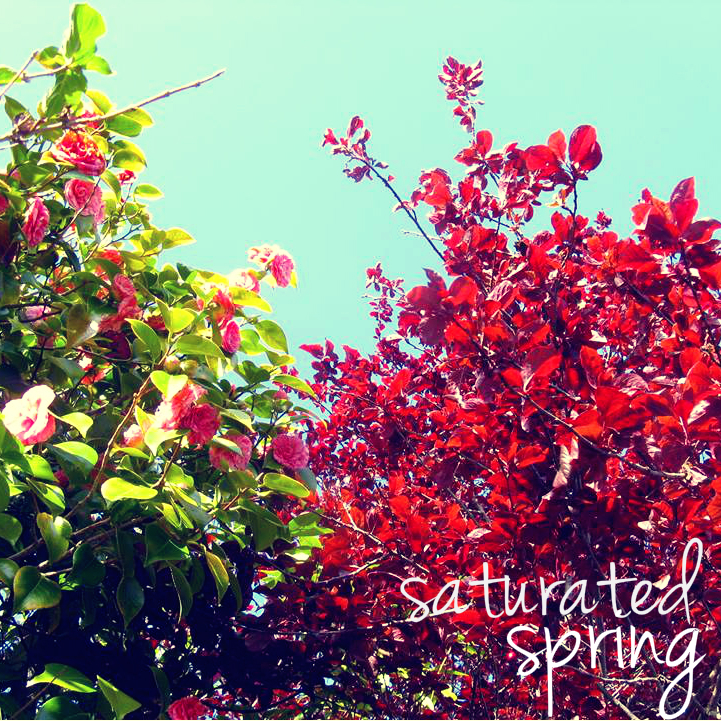 CH_Saturated Spring