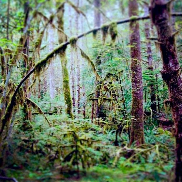 Finding LATITUDE.  The Olympics.  | artsy forager #findinglatitude #olympics #travel #washington #pacificnorthwest #pnw
