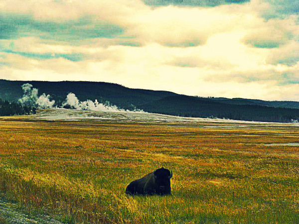 Finding Latitude | Yellowstone #travel #yellowstone